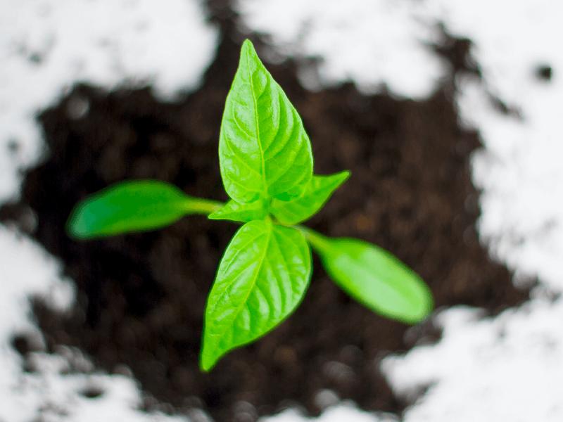 Día del medioambiente: cómo cuidar del planeta desde la oficina